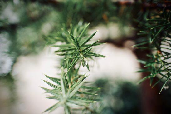 tree-3022891