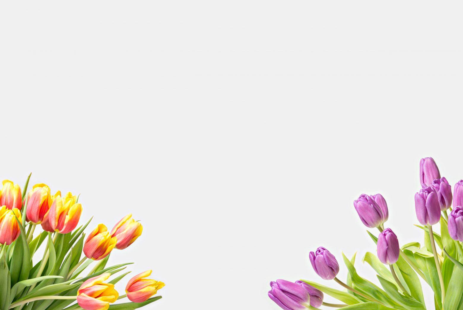 flower-2108645