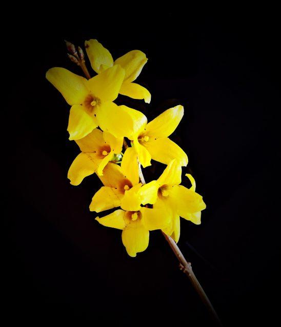 flower-2213034