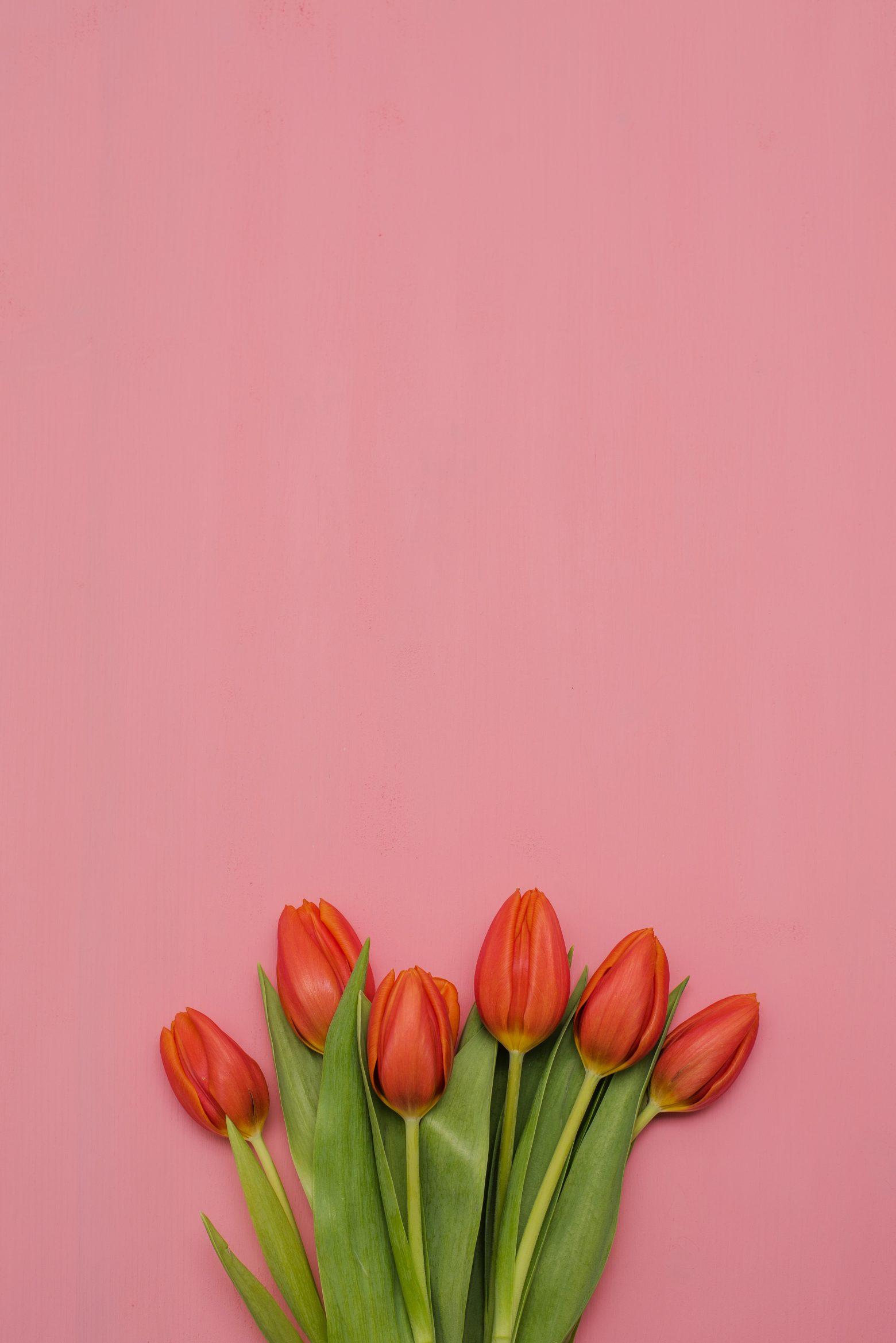 flower-3132022