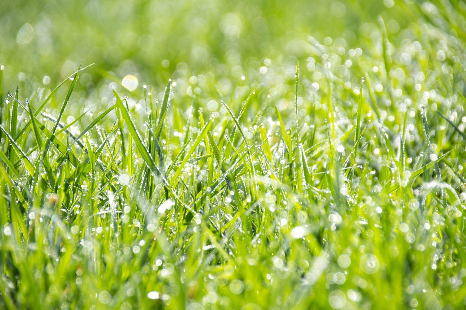 grass-1326759