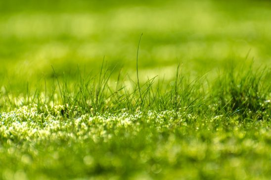 green-315215