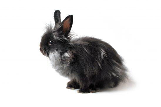 hare-2175403