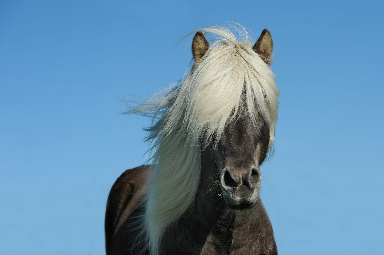 horse-1330690
