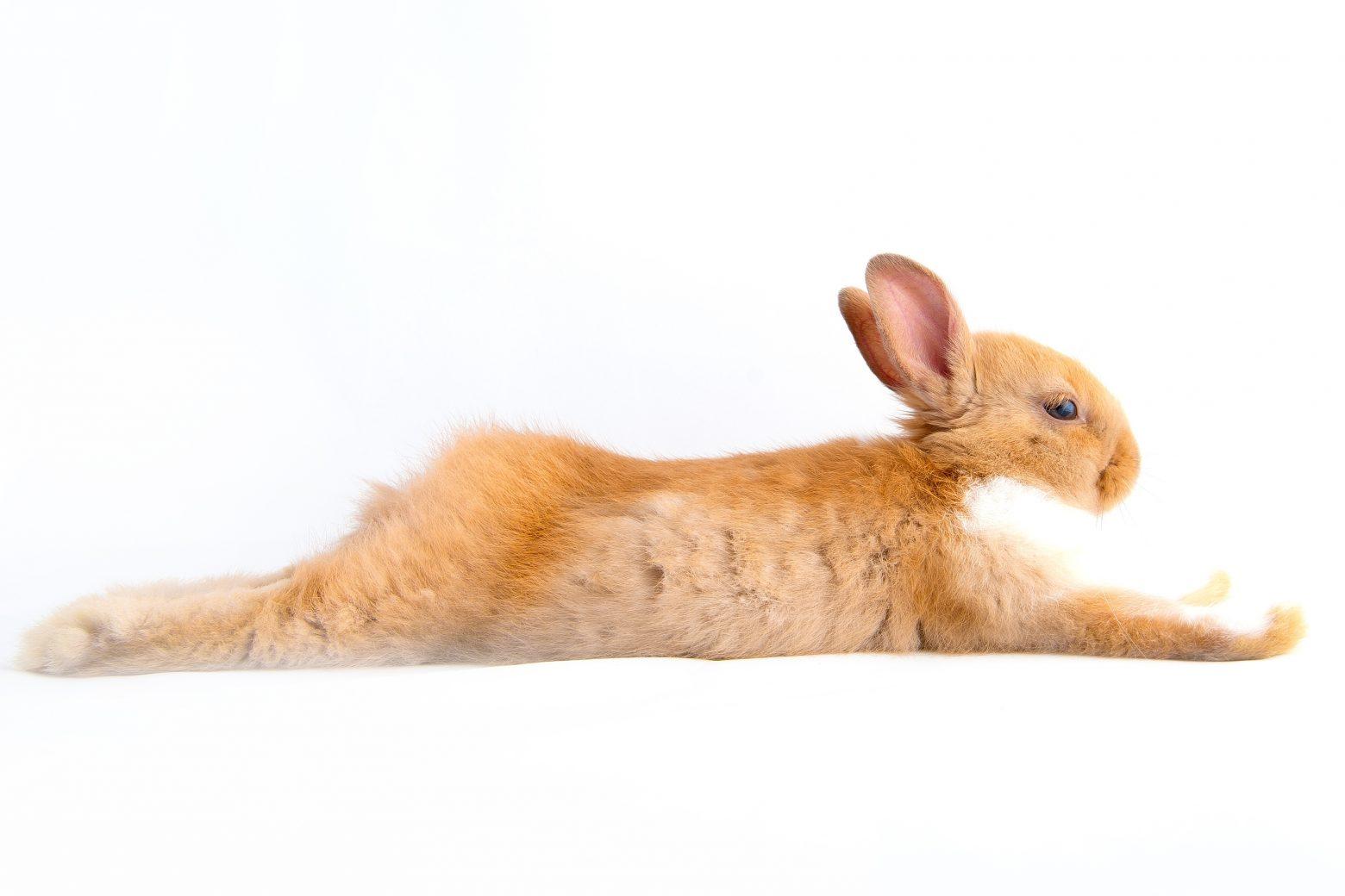 rabbit-1080539