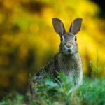rabbit-1882699