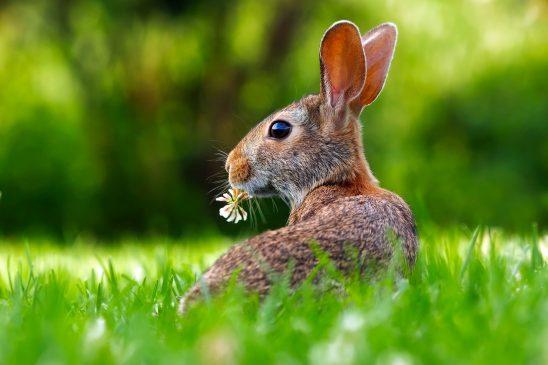 rabbit-1903016