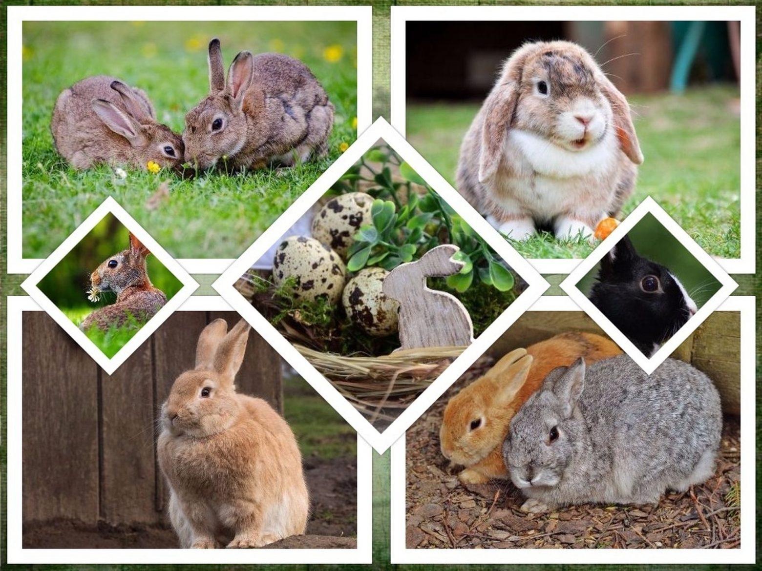 rabbit-2133898