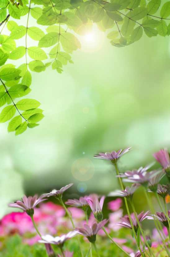 spring-315230