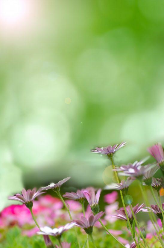 spring-315231