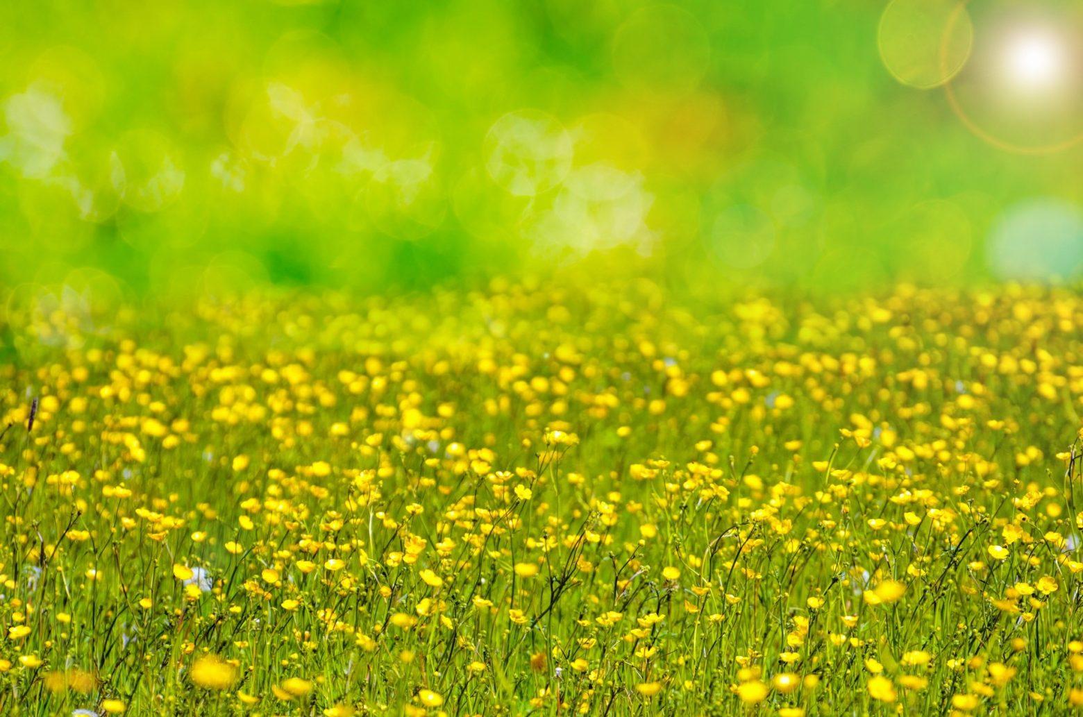 spring-315241