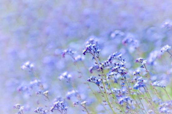 spring-315242