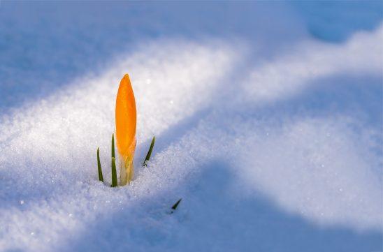 spring-awakening-3132112