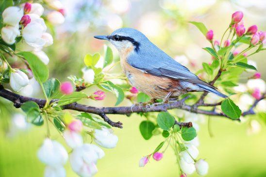 spring-bird-2295431