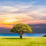 tree-2435269