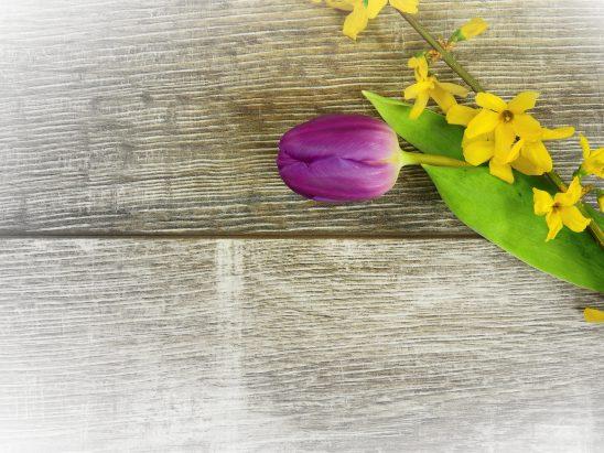 tulip-2180279