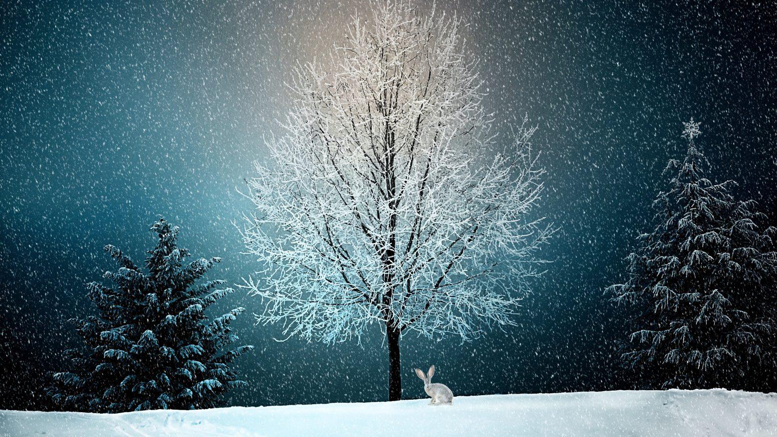 winter-2896970