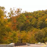 2015-10-02 Berkshire Leaf Color 5 for CPD