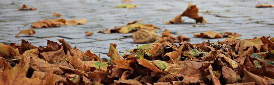 autumn-1685924