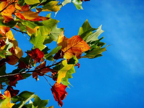 autumn-974882
