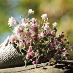 bag-gypsofilia-seeds-1716655