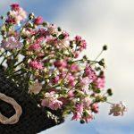 bag-gypsofilia-seeds-1716747
