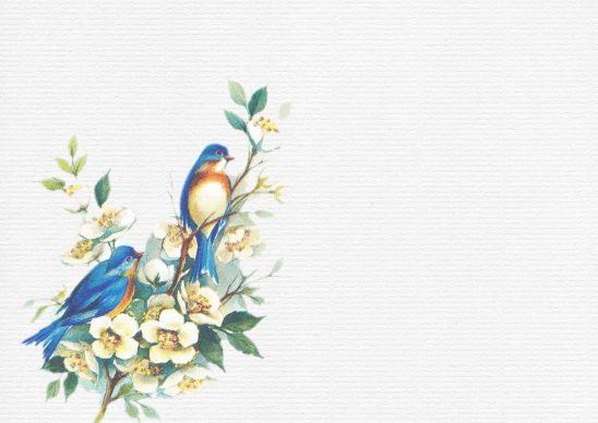 birds-979479