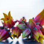 blossom-3074967