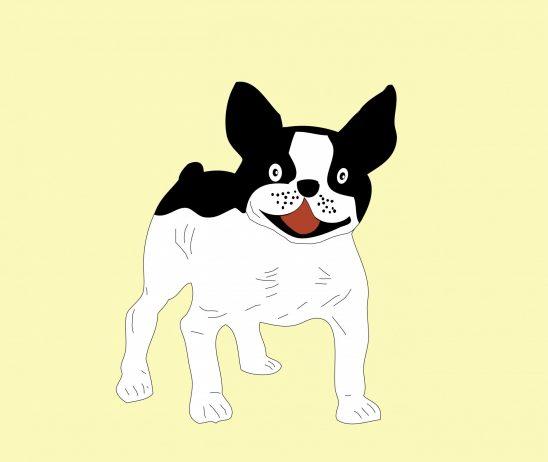 dog-220280
