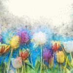 flower-3304566