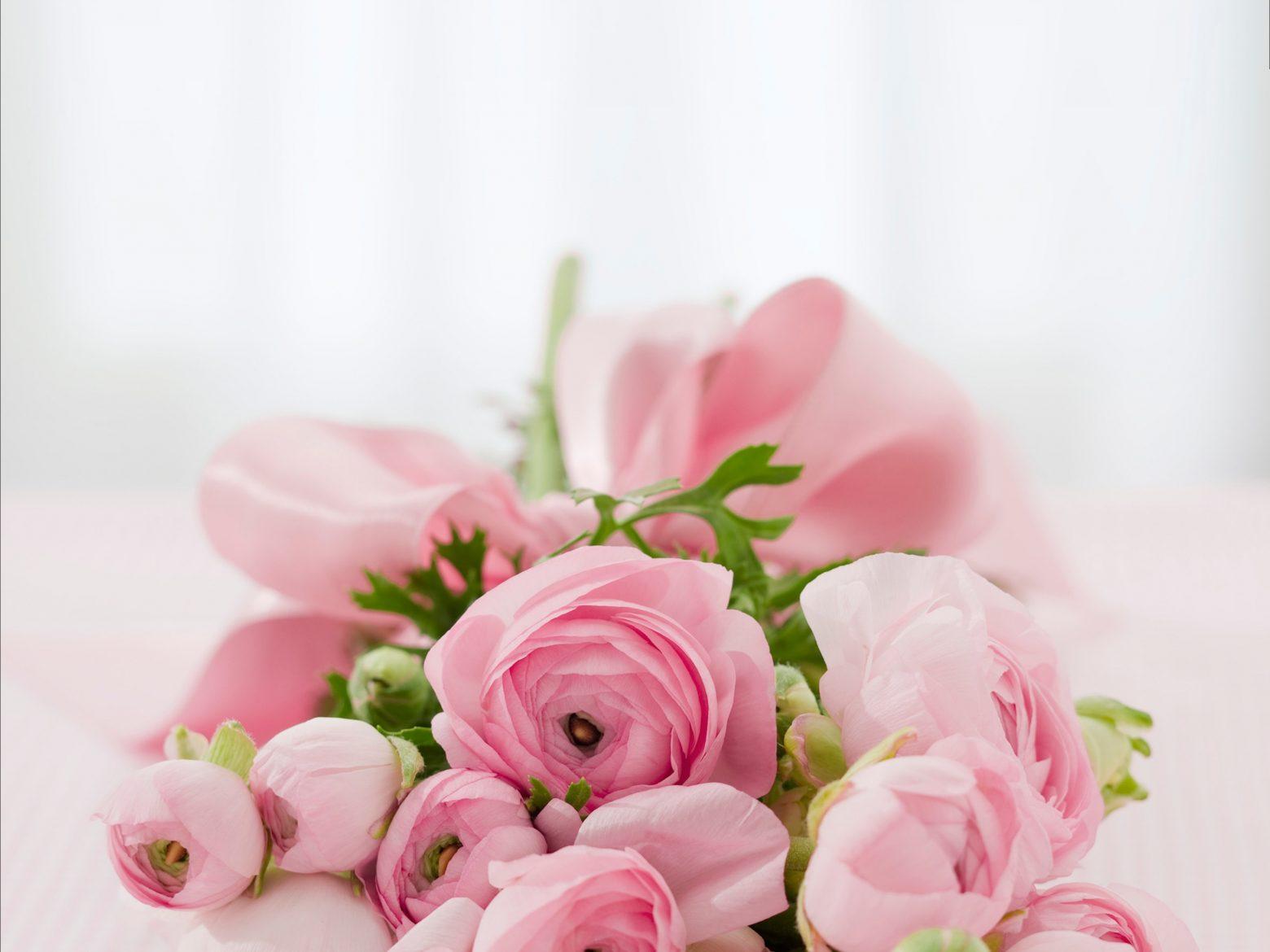 roses-142876