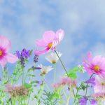 wild-flowers-571940