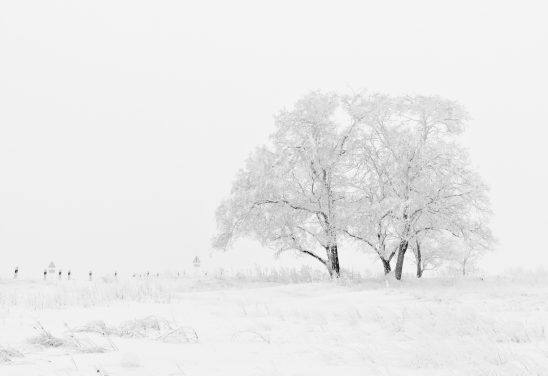 winter-20234