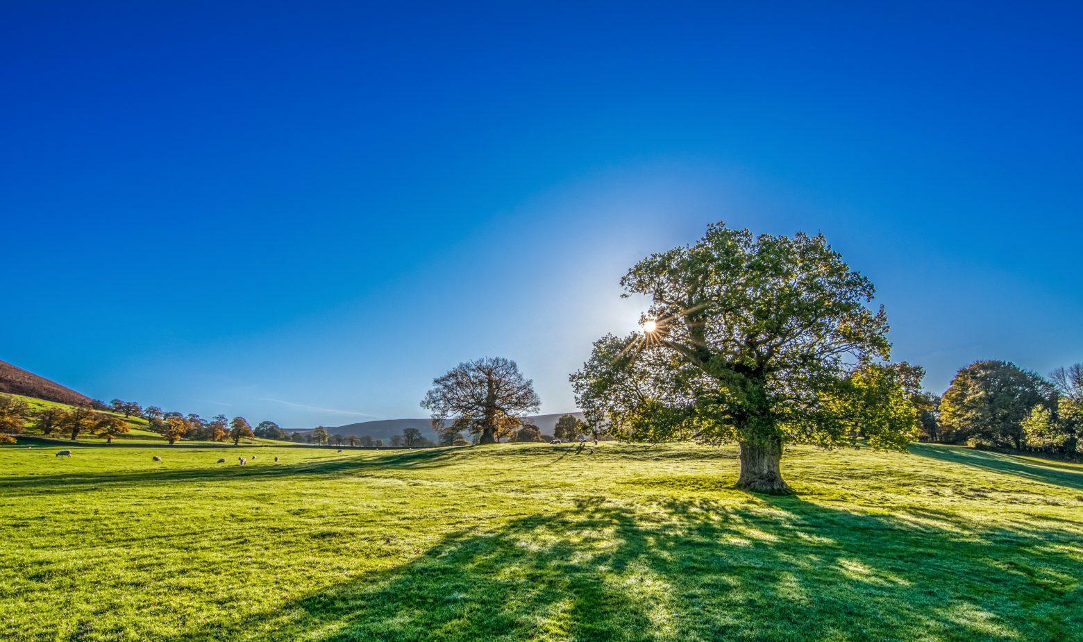 autumn-sunshine-2916763