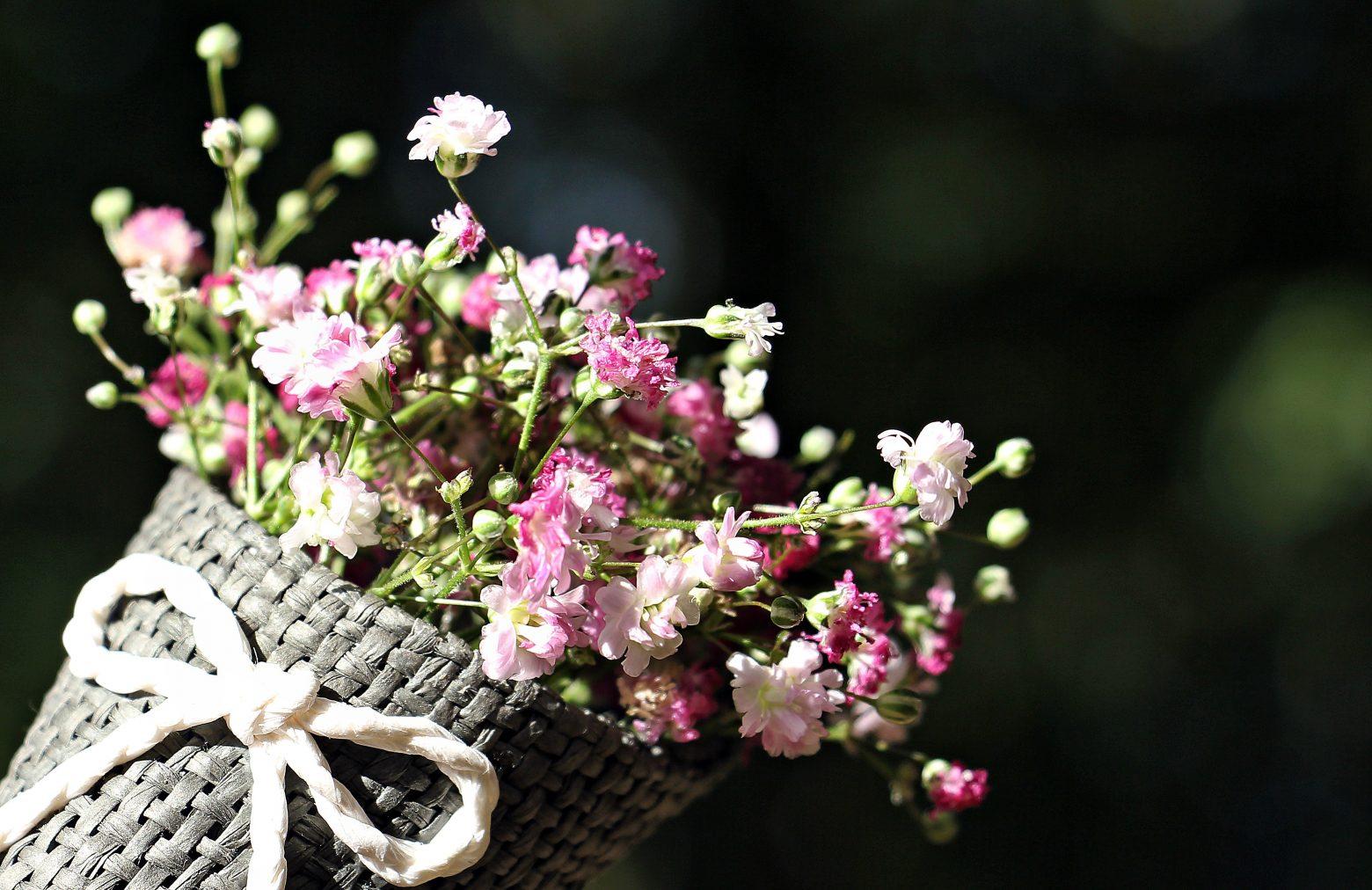 bag-gypsofilia-seeds-1716630