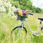 bicycle-788733