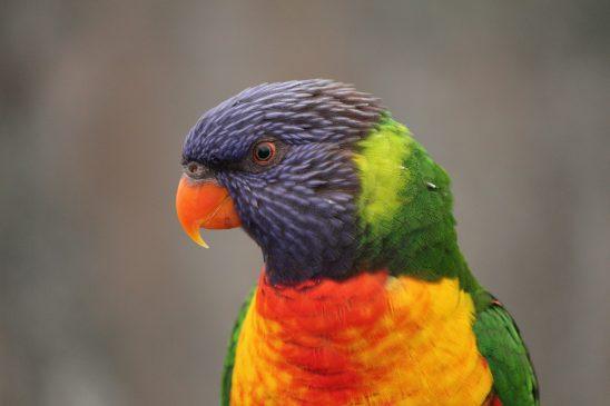 bird-1139734