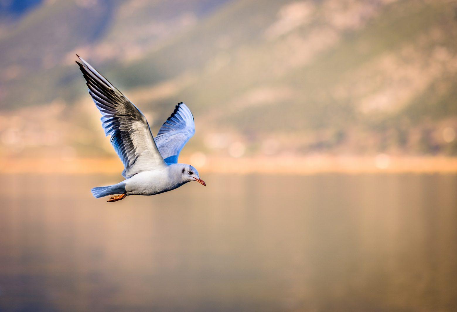 bird-3158784