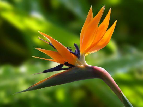 blossom-236008