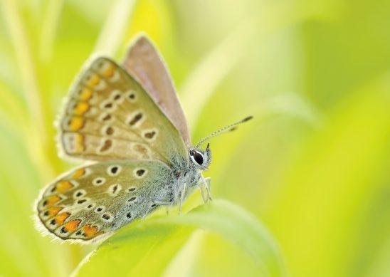 butterflies-95358