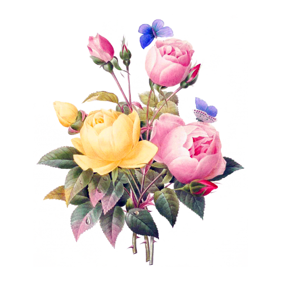 flowers-2919730