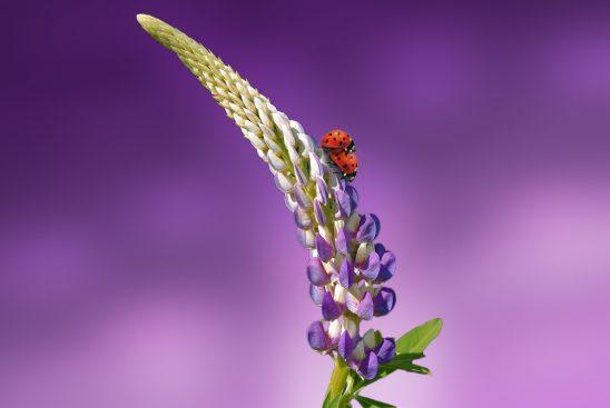 ladybug-1320562