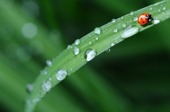 ladybug-574971
