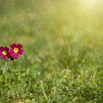 meadow-2470419