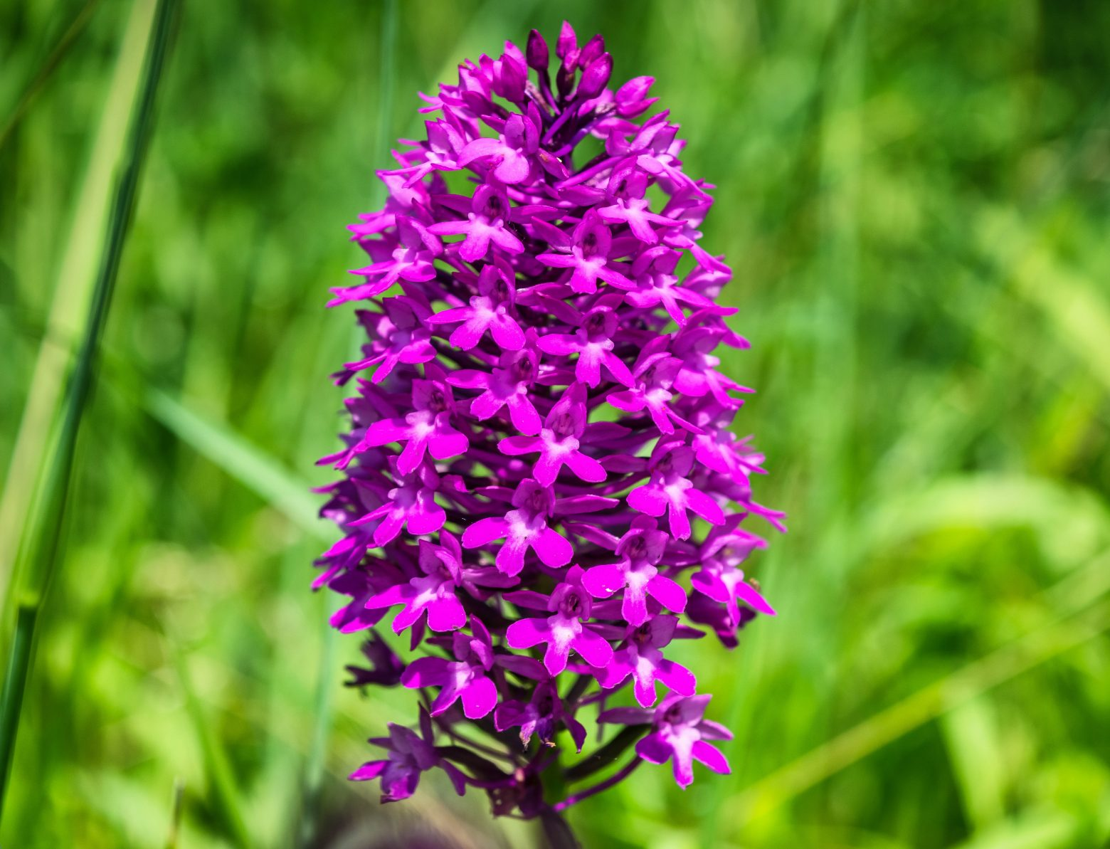 orchid-1444549