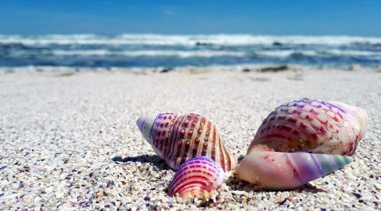 seashell-2821388