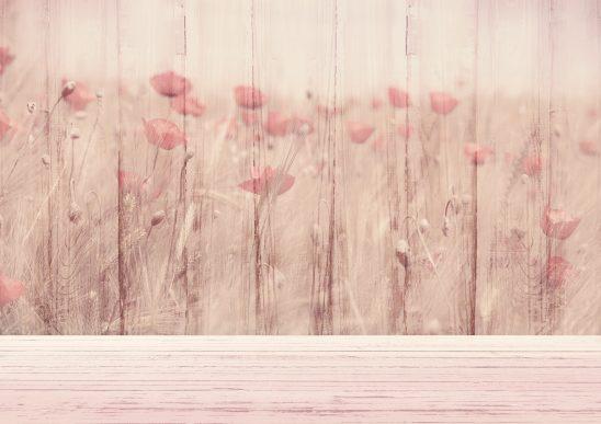 background-image-3243659