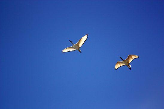 bird-350680