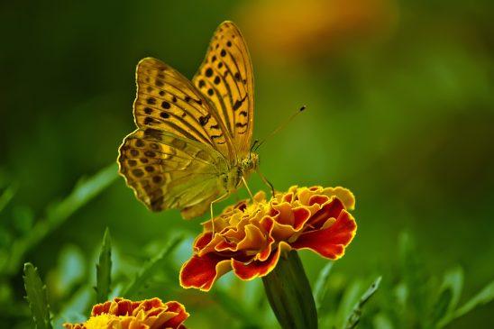 butterfly-1829404