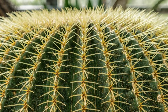 cactus-1591568